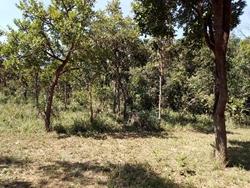 Rural à venda Rodovia DF-130 Núcleo rural Rajadinha