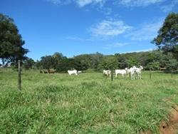 Rural à venda URua NA   URUANA GOIAS FAZENDA 34 ALQUEIRES ESCRITURADA REGISTRADA