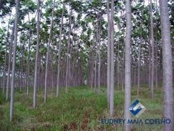 Rural à venda TRES MARIAS   Fazenda na região Noroeste de Minas Gerais