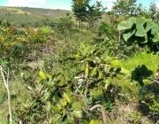 Rural à venda Ponte Alta Norte